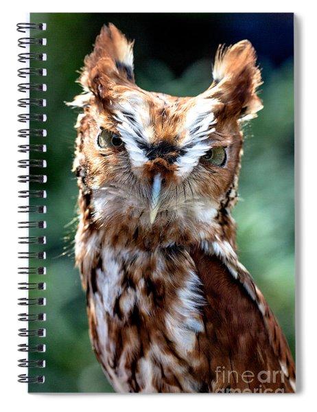 Eastern Screech-owl Spiral Notebook