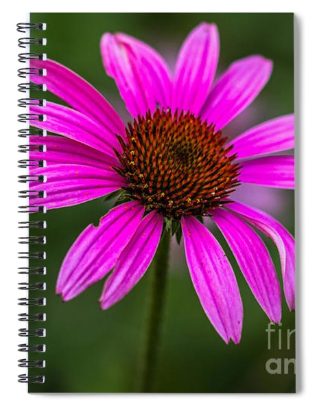 Echinacea Purpurea Spiral Notebook