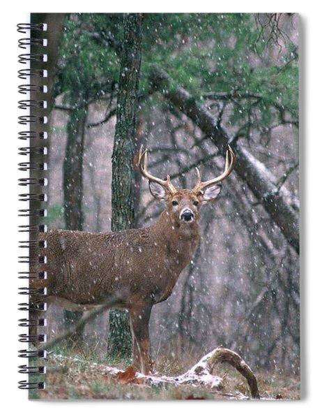 Eight Point Whitetail Deer Buck Spiral Notebook