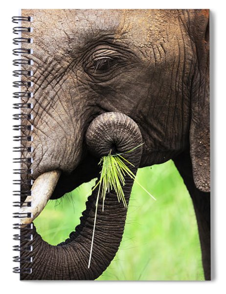 Elephant Eating Close-up Spiral Notebook