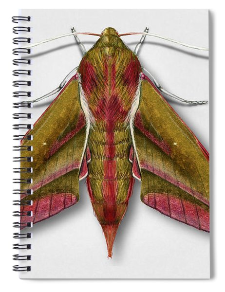 Elephant Hawk Moth Butterfly - Deilephila Elpenor Naturalistic Painting - Nettersheim Eifel Spiral Notebook