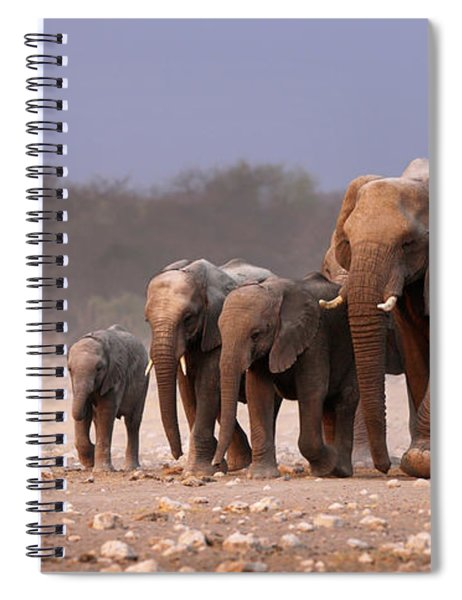 Elephant Herd Spiral Notebook
