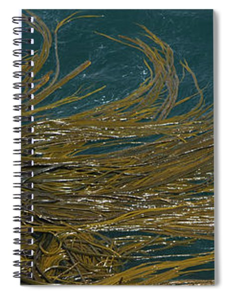 Elevated View Of Kelp Bed, Falkland Spiral Notebook