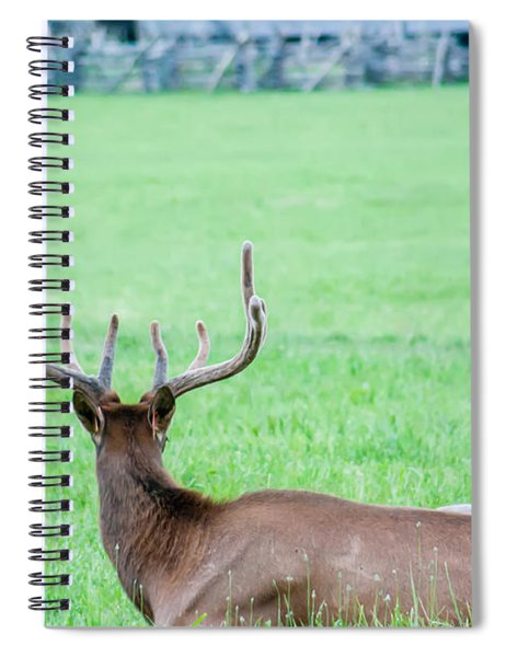 Elk Resting On A Meadow In Great Smoky Mountains Spiral Notebook by Alex Grichenko