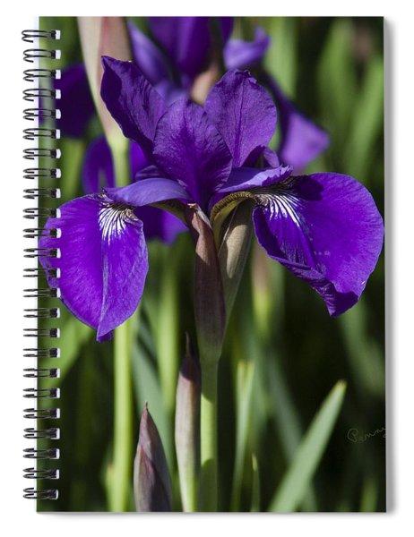 Eloquent Iris Spiral Notebook