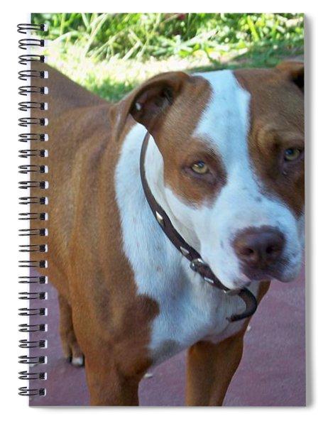 Emma The Pitbull Dog Spiral Notebook by Ai P Nilson
