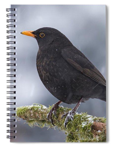Eurasian Blackbird And Snowfall Germany Spiral Notebook