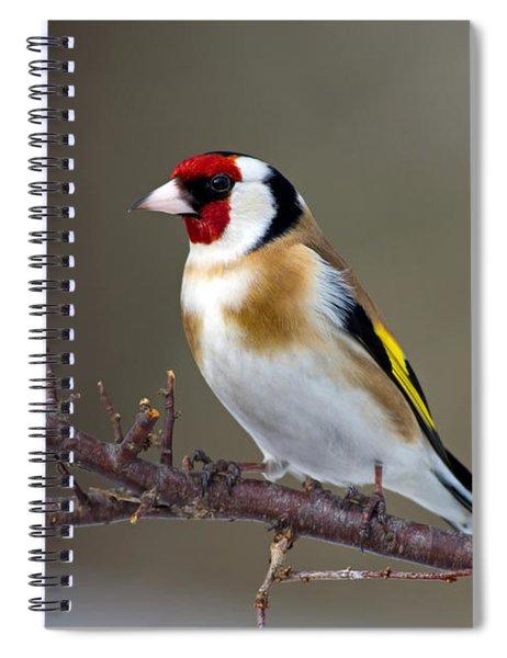 European Goldfinch  Spiral Notebook
