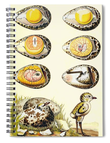Evolution Of A Chicken Within An Egg Spiral Notebook