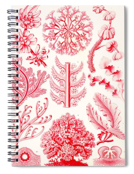 Examples Of Florideae From Kunstformen Der Natur Spiral Notebook