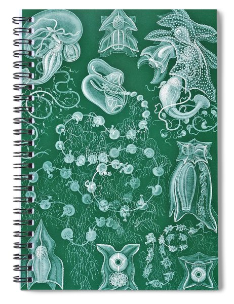 Examples Of Siphonophorae Spiral Notebook