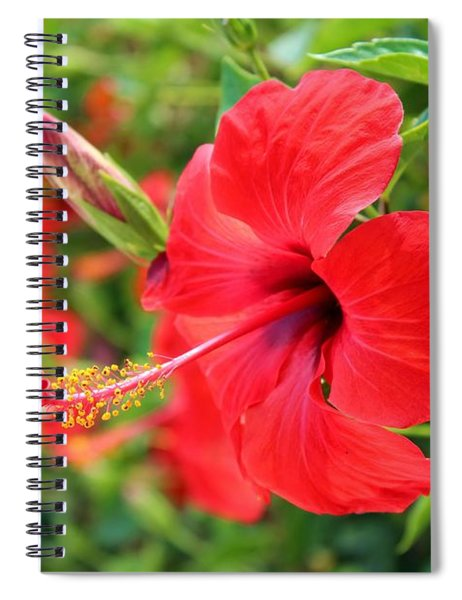 Exotic Red Hibiscus By Julia Fine Art Spiral Notebook