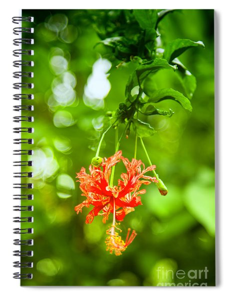 Exotic Spiral Notebook