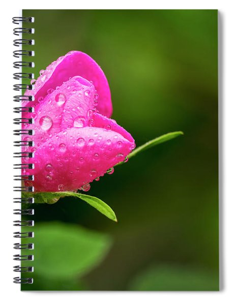 Extreme Close Up Of A Wild Rose Bud Spiral Notebook