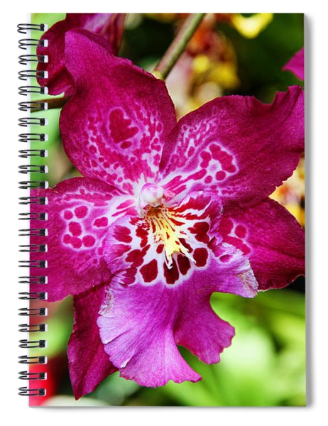 Fabulous Fushia Orchids By Diana Sainz Spiral Notebook