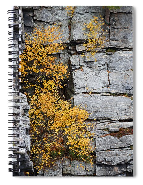 Fall Foliage Colors 01 Spiral Notebook