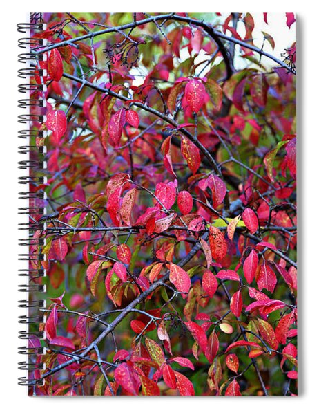 Fall Foliage Colors 05 Spiral Notebook