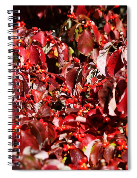 Fall Foliage Colors 08 Spiral Notebook