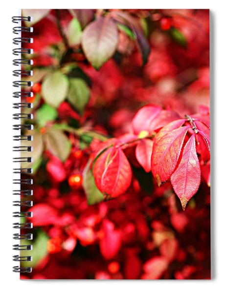 Fall Foliage Colors 10 Spiral Notebook