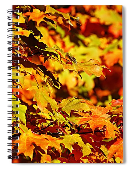 Fall Foliage Colors 13 Spiral Notebook