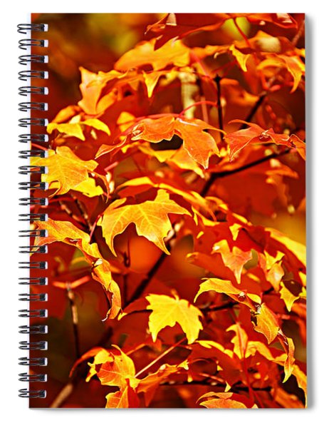 Fall Foliage Colors 14 Spiral Notebook