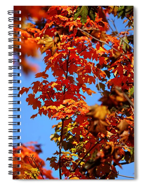 Fall Foliage Colors 15 Spiral Notebook
