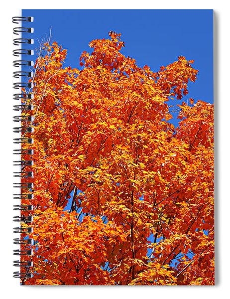 Fall Foliage Colors 19 Spiral Notebook