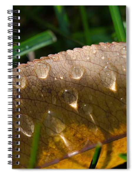 Fall Morning Leaf And Dew Spiral Notebook