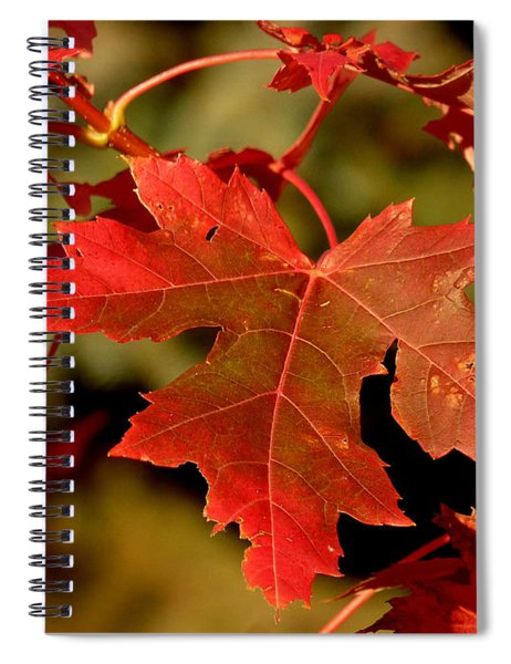 Fall Red Beauty Spiral Notebook