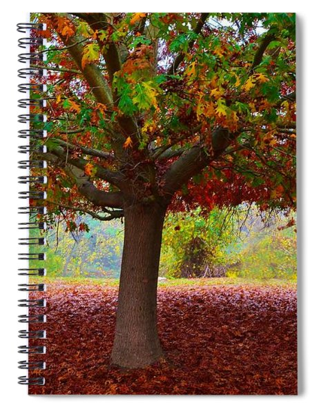 Fall Tree View Spiral Notebook