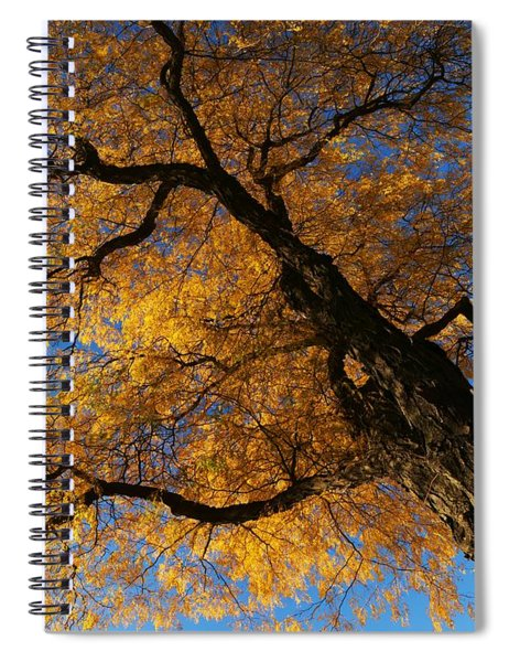 Fall Trees 1 Spiral Notebook