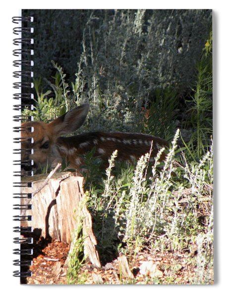 Fawn Front Yard Divide Co Spiral Notebook
