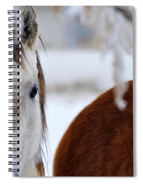 Fence Friend 13195 2 Spiral Notebook