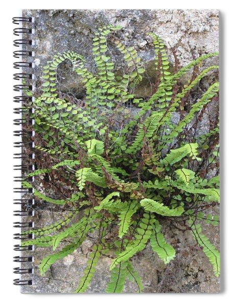 Fern Tendrils  Spiral Notebook