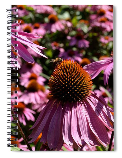 Field Of Echinaceas Spiral Notebook