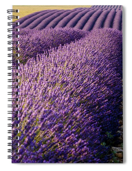 Spiral Notebook featuring the photograph Fields Of Lavender by Brian Jannsen