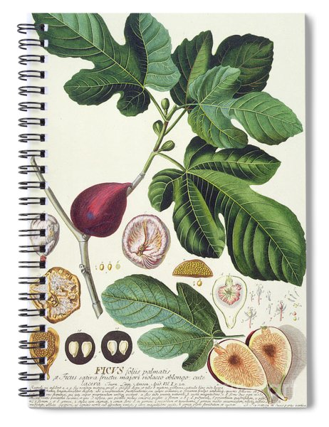 Fig Engraved By Johann Jakob Haid  Spiral Notebook