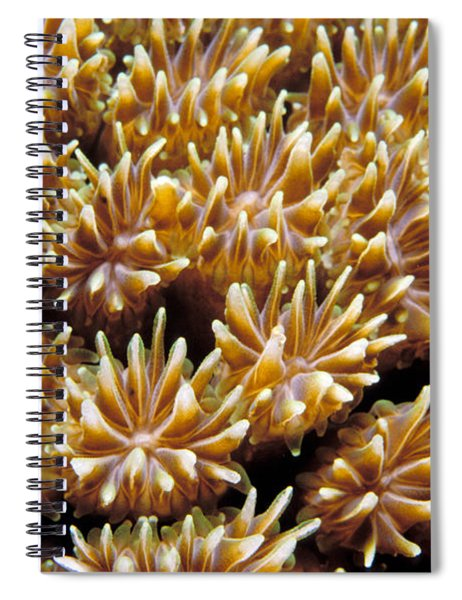 Fiji Soft Coral Spiral Notebook