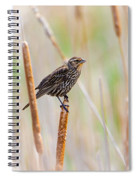 Finding Summer Spiral Notebook