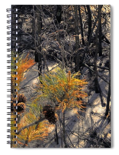 First Sign Of Spring At Cape Henlopen Spiral Notebook