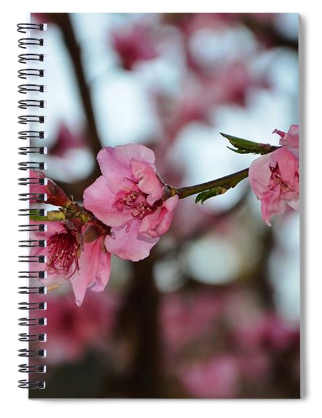 First Spring Blossoms Spiral Notebook