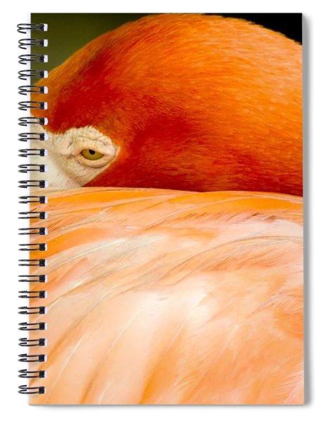 Flamingo Napping Spiral Notebook