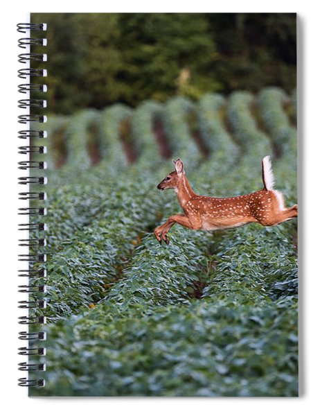 Flight Of The White-tailed Deer Spiral Notebook