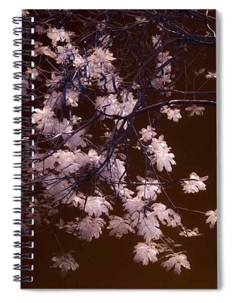 Florida Spring Spiral Notebook