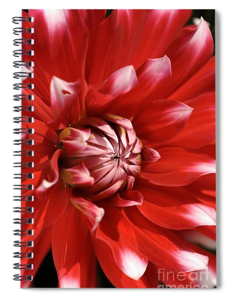 Flower- Dahlia-red-white Spiral Notebook