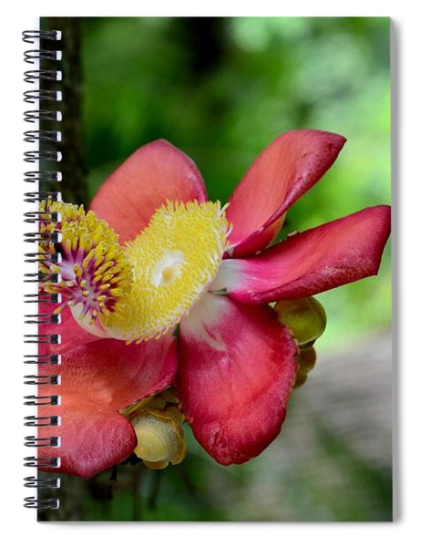 Flower Of Cannonball Tree Singapore Spiral Notebook