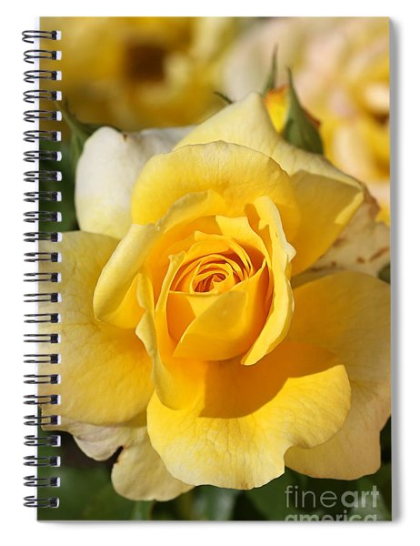 Flower-yellow Rose-delight Spiral Notebook
