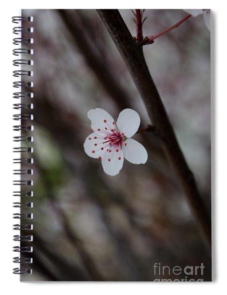 Flowering Plum 3 Spiral Notebook
