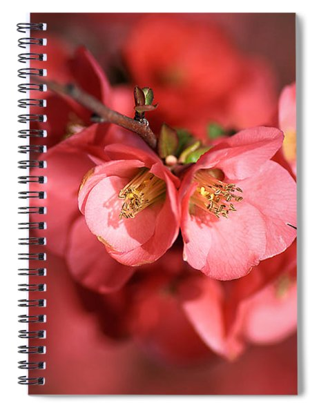 Flowering Quince Spiral Notebook