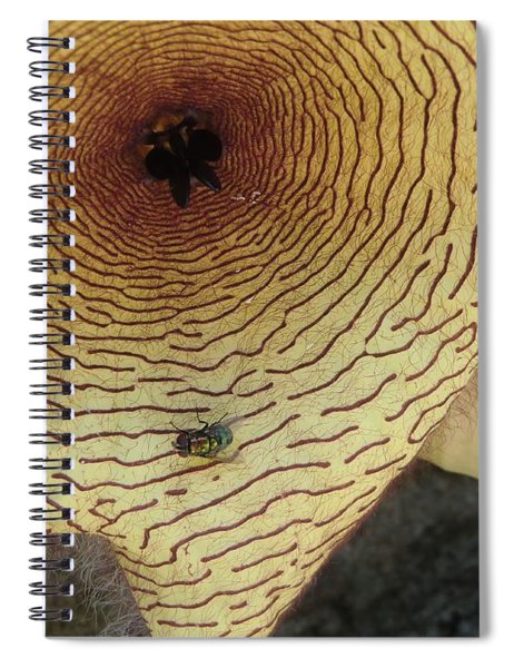 Fly To Me Spiral Notebook